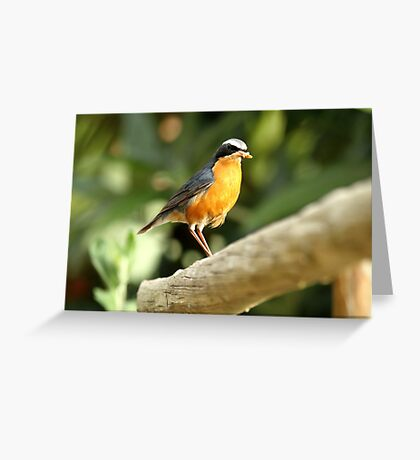 Birds of Asia series # 12 Greeting Card