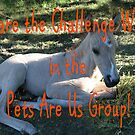 Challenge banner for Pets Are Us Group by SKNickel