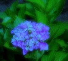 royalty...petals...~ by dabadac