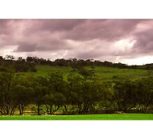 The Rain came and the Earth turned Green Photographic Print
