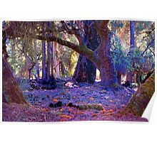Forest Scape I Poster