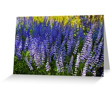 Field of Lupine Greeting Card