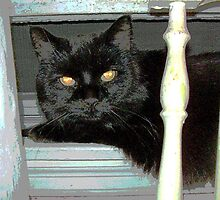 Blackie on the Sill by hickerson