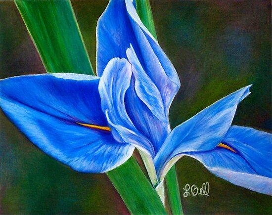 Beautiful Blue Flag Iris Flower - Fleur-de-lis from the Garden by Laura Bell
