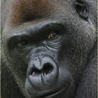 Silverback by sbarnesphotos