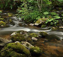 River Tales by Denitsa Prodanova