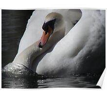 swan charging Poster