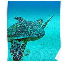 Hawksbill Turtle 3 Poster