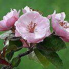 Blossom Trio by David Kocherhans
