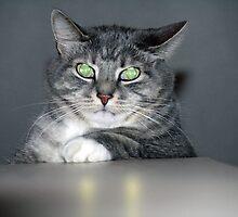 Evil Cat by Cassie Jahn