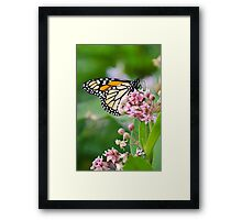 Monarch Butterfly on Milkweed Flower Framed Print