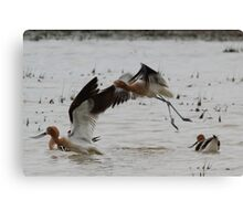 Up With the Avocets Canvas Print