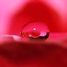 Petal Drop by Amy Dee