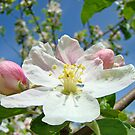 Seasonal Photography Calendar Floral Botanical by BasleeArtPrints