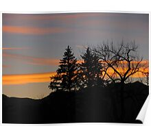 """""""Tress Silhouetted By Orange Sunset"""" Poster"""