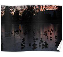 """""""Ducks On Frosen Purple Pond in Twilight"""" Poster"""