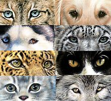 Animal Eyes by Nicole Zeug