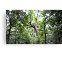 Hinkson Forest Canvas Print
