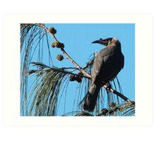 Noisy Friarbird Art Print