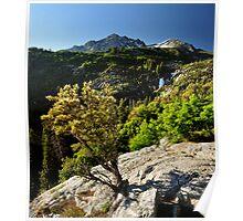 Waterfall in Dry Fork Canyon, Utah Poster