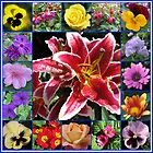 Selection of Summer Flowers Collage by BlueMoonRose