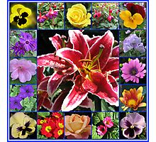 Selection of Summer Flowers Collage Photographic Print