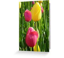 Tulips - Zhongshan Park, Beijing Greeting Card