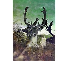 Ridiculously Photogenic Deer Photographic Print