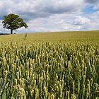 Wheat Field near Pately Bridge by James Dolan