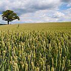 Wheat Field near Pately Bridge by James Dolan