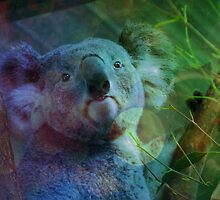 Koala Looks On by tiffymoon