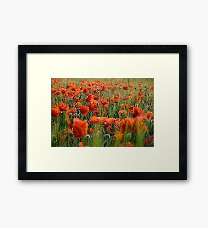 On Flanders Fields Framed Print