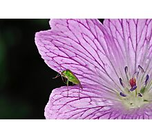 Aphid 6 Photographic Print