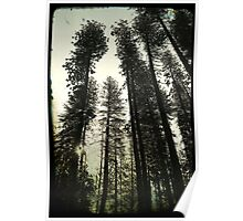 Pine Trees Reach For The Skies 2 - Yosemite National Park - Vintage Poster