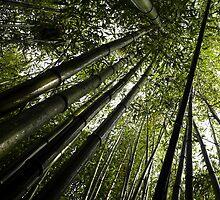 #868  Bamboo by MyInnereyeMike