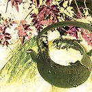 Anyone for spider tea? by elwyn crawford