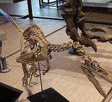 Random Velociraptor by skeletonsrus