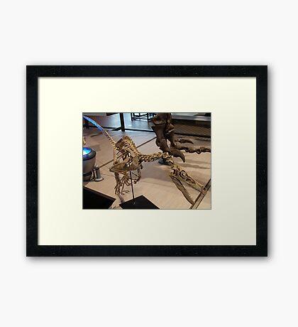 Random Velociraptor Framed Print
