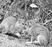 black and white squirrel love by liza scott