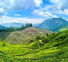 Tea Estate by Vinod Kumar M