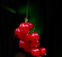 RedCurrants by RosiLorz