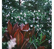 Morning Dew Leaves Photographic Print