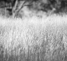 tall grass by linelight