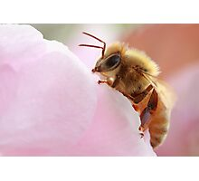 Honey Bee Break Photographic Print