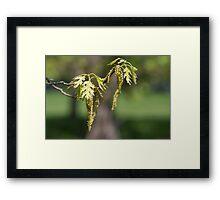 New Oak Framed Print