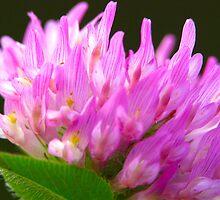 Perfect Pink by wanda lechene