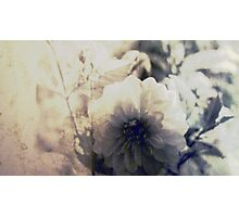 Vintage Flower 1 Photographic Print