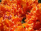 Rhododendron Flowers Orange art prints Floral Garden by BasleeArtPrints