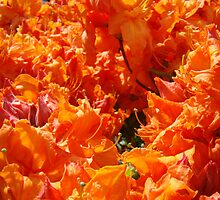 Rhododendron Flowers Orange art prints Floral Garden by BasleeArtPrints