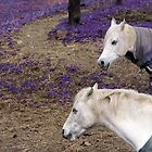 Two White Horses In Field Of Purple. by Scott Mclaren